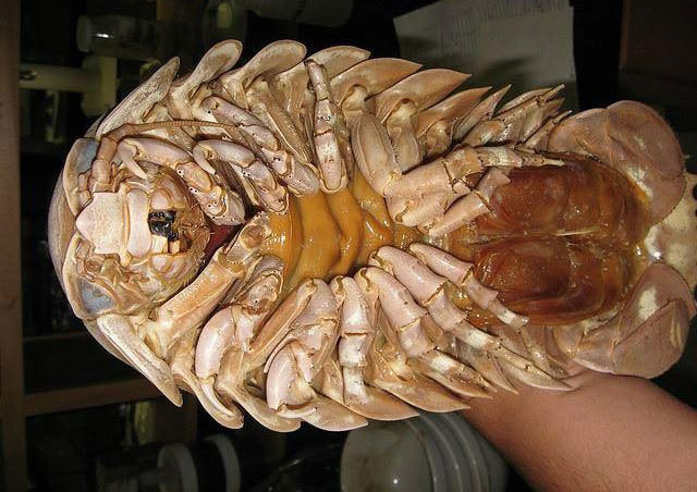 bọ biển, hải sản, đặc sản nhà giàu,