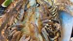 Bọ biển: Món ăn đáng sợ nhưng đắt giá của nhà giàu