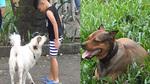 Nhiều chó thả rông, không rọ mõm trong công viên trung tâm Sài Gòn