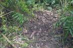 Phát hiện thi thể bé gái 13 tuổi chôn dưới bụi cây