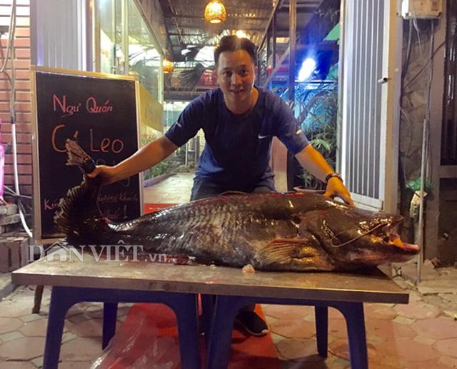 Cá leo 'khủng' nặng 52kg, dài bằng người lớn tiền triệu/kg ở Thủ đô