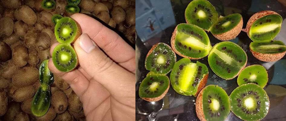 Nhìn đã chảy nước miếng, chị em tranh mua kiwi tí hon 1 triệu/kg