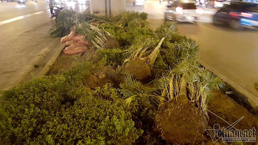 Gầm đường sắt trên cao Cát Linh-Hà Đông có 1.500 cây cau đẻ