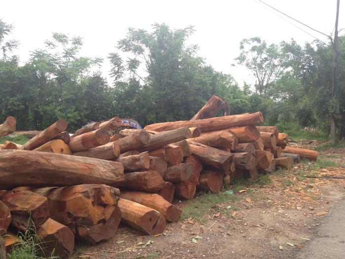nhà gỗ, gỗ mít, gỗ lim, gỗ quý