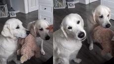 Chó ăn cũng phải có thứ tự