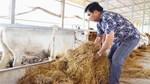 Anh nông dân lãi 15 tỷ đồng/năm nhờ công nghệ cao