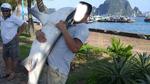 Xôn xao chuyện cá mập xuất hiện tại vịnh Hạ Long