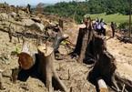 Đề nghị tạm đình chỉ Hạt phó kiểm lâm vụ phá rừng cực lớn