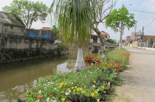 Đẹp ngỡ ngàng những đường làng trải hoa