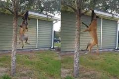 Đây là cách các chú chó...luyện cơ hàm