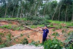 Hà Tĩnh kêu gọi mua gỗ giúp dân trong bão