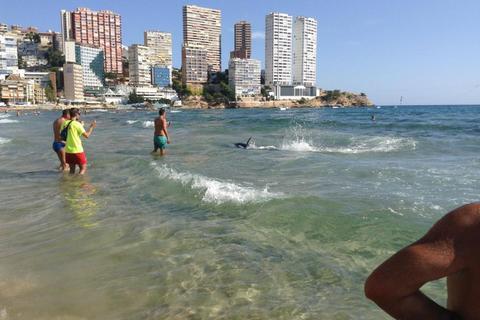 Phát hiện cá mập bơi sát bờ, du khách bỏ chạy tán loạn