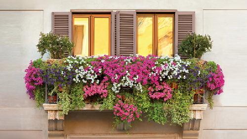 Nhà có ban công, nhất định phải trồng hoa đẹp mê mẩn đến thế này!