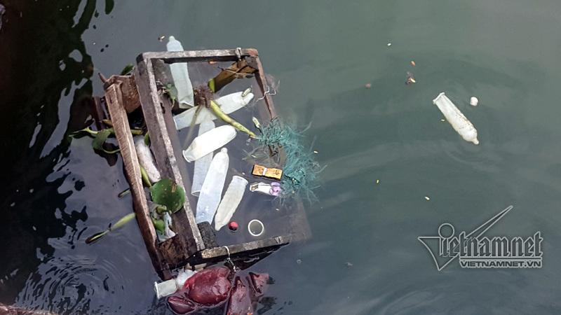 Chèo thuyền vớt bao cao su lềnh phềnh ở hồ Tây