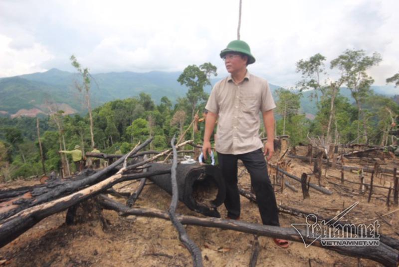 phá rừng, rừng phòng hộ, Quảng Nam