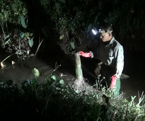 Xem người đàn ông Hà Nội chế chai nhựa thành rọ, bắt 2-3 kg cua đồng mỗi ngày