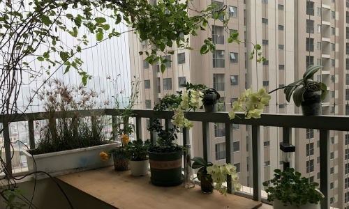 chung cư Hà Nội, phong thủy, kinh nghiệm mua nhà chung cư
