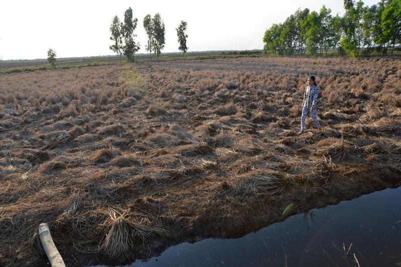 Biến đổi khí hậu, ĐBSCL, Hạn mặn