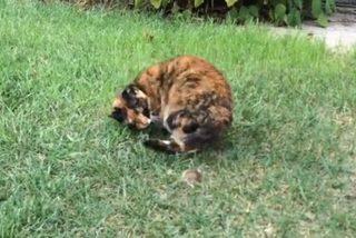 Mèo chơi đùa với chuột như đôi bạn thân thiết