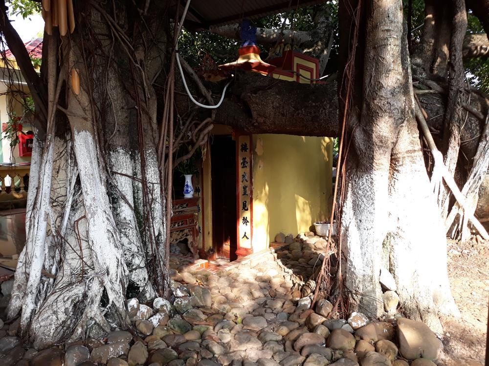 Đến xem cây đa cổ thụ 13 gốc lớn nhất Việt Nam trên 300 năm tuổi