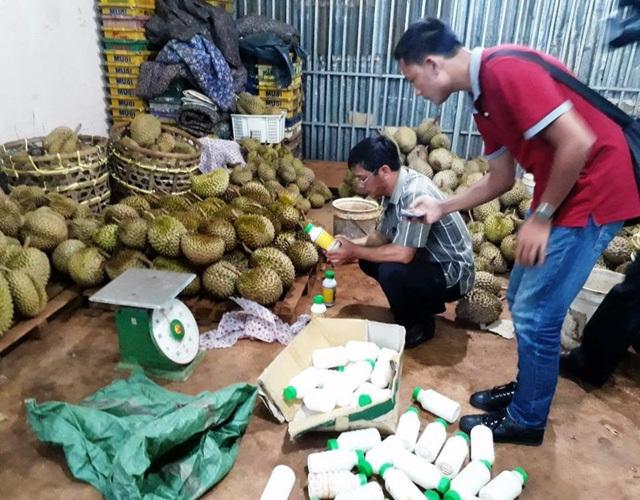 Làm chín sầu riêng bằng phân bón lá vào buổi tối, sáng mang đi bán