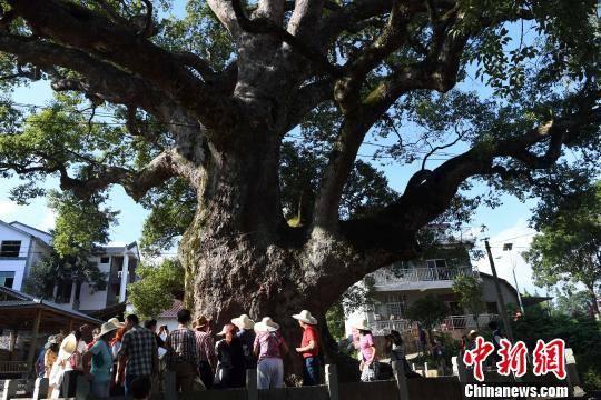 tượng Phật. Trung Quốc cây cổ thụ