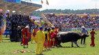 Chọi trâu Đồ Sơn: Hàng vạn khách cười bò trên sân vì sự cố hi hữu