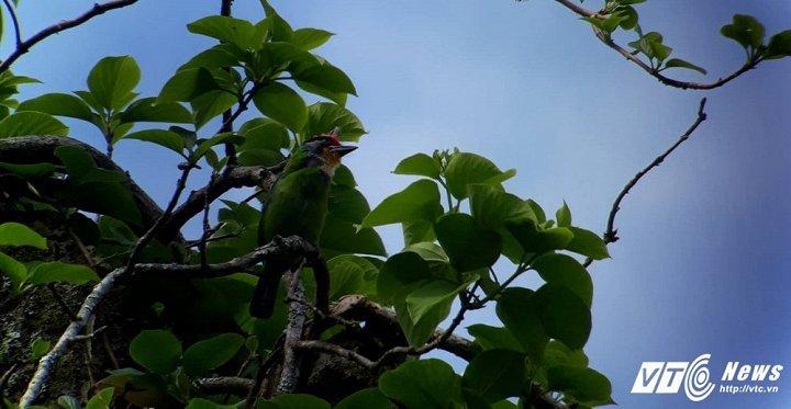 Gặp người đàn ông có biệt tài 'nói chuyện' với chim nơi non thiêng Bạch Mã