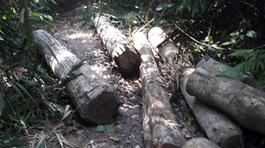 Đề nghị cách chức Trưởng Ban Tuyên giáo huyện liên quan vụ phá rừng