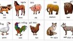 Tên tiếng Anh 36 loài động vật thường gặp nhất