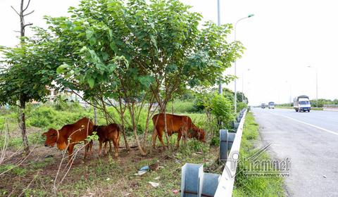 trồng cây trên đại lộ TL