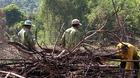 Phá rừng tự nhiên để trồng rừng dự án
