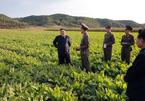 Kim Jong Un vui vẻ thăm cánh đồng rau