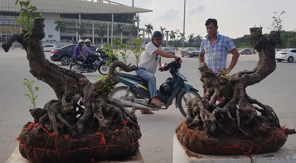 'Quái thú' ra Thủ đô, dân chơi cây miền Bắc phát sốt