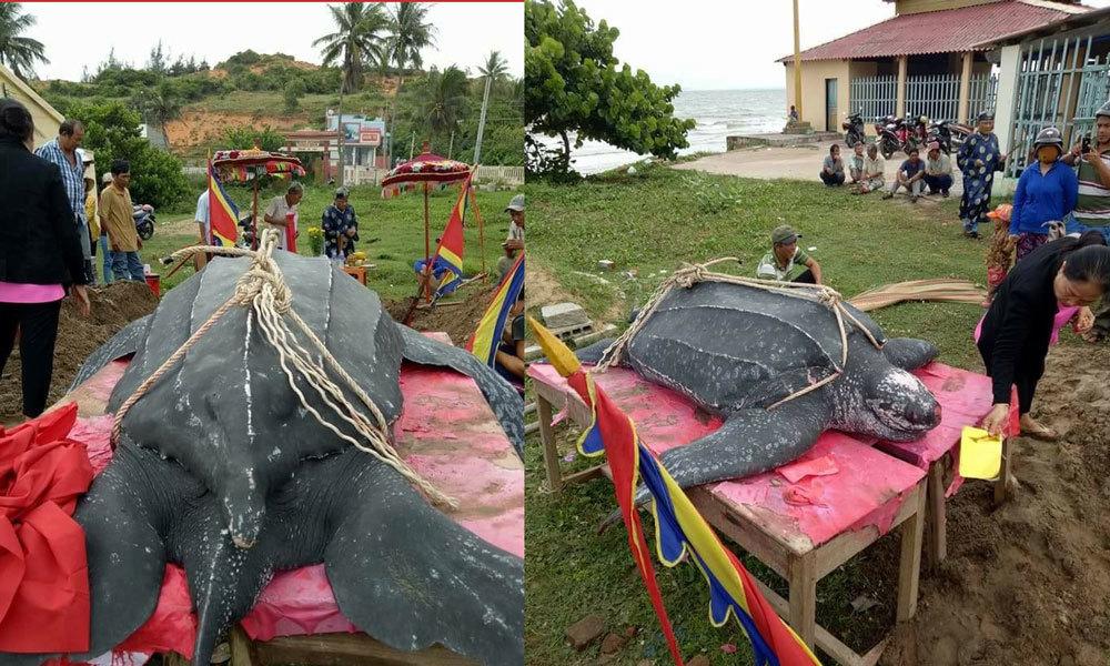 rùa biển, Mũi Né, phong tục