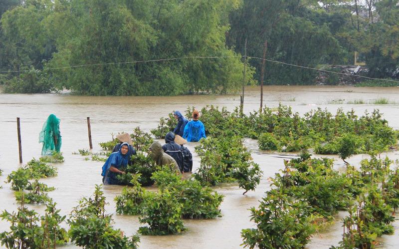 thiên tai, hạn hán, mưa bão, thiệt hại sau mưa bão
