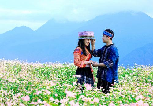 Tháng Mười lên Fansipan ngắm đồi hoa Tam giác mạch