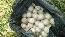 Buôn 30 quả trứng rùa biển, dính án cải tạo 12 tháng