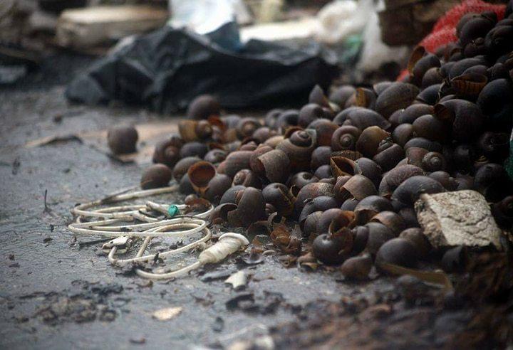 Rùng mình giòi bật tanh tách giữa bãi rác gần chùa Trầm