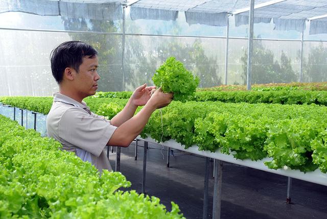 tỷ phú nông dân, nông dân làm giàu, rau sạch