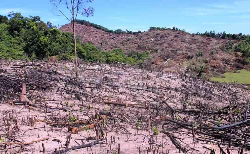 phá rừng, kỷ luật lãnh đạo, lâm tặc, Bình Định