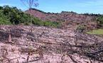 Phó bí thư huyện bị đề nghị kiểm điểm vụ phá rừng táo tợn