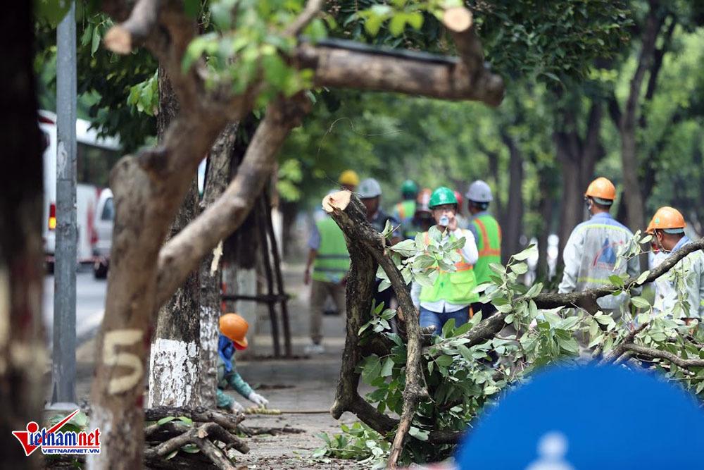 Hà Nội chặt, chuyển hàng cây đẹp nhất đường Kim Mã