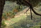 Binh sĩ Hàn Quốc thiệt mạng do đạn lạc