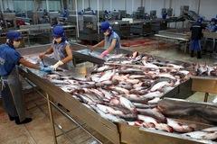 Trung Quốc tăng mua, xuất khẩu cá tra bứt phá