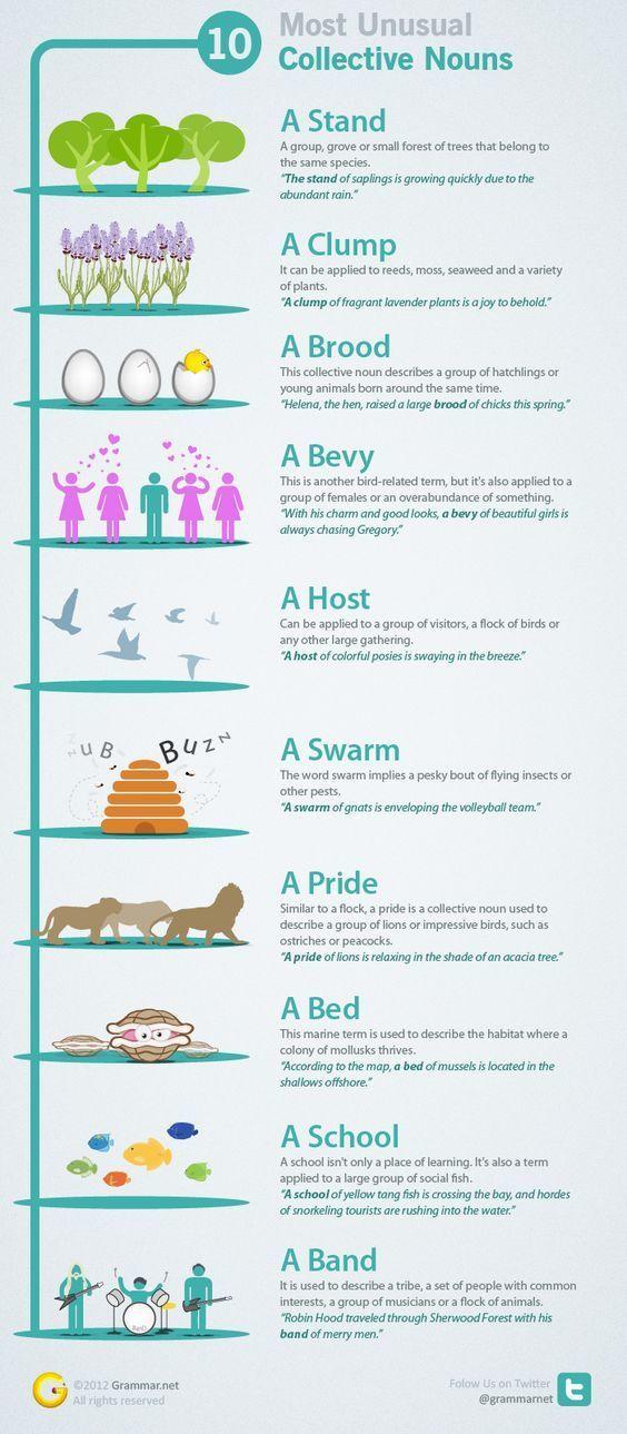 10 danh từ tập hợp tiếng Anh ít người biết đến