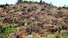 Giám đốc chủ mưu phá rừng ở Bình Định bị bắt