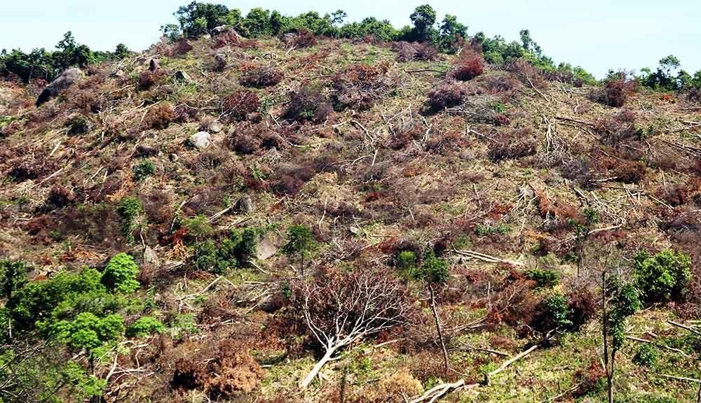 phá rừng, rừng, Bình Định