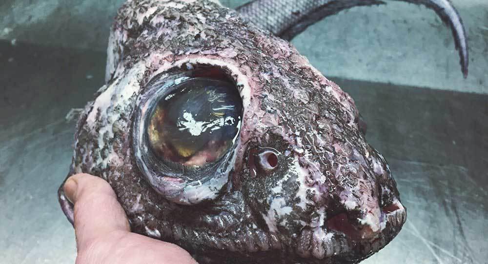 quái vật biển, cá kỳ dị, đại dương