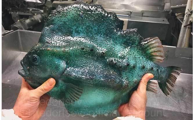 Ảnh hiếm về những loài quái vật biển sâu